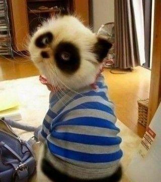 Haha, I THINK this is cute...I like Pandas, and I like kittehs...soooo...???