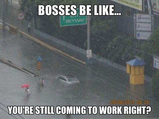 Bosses be like…