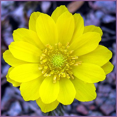 ~~ Yellow spring flower ~~