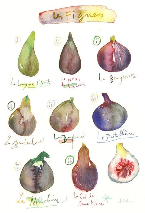 Fig varieties Original watercolor painting Food art Kitchen decor Fruit Illustration Botanical french purple Fig art, via Etsy.