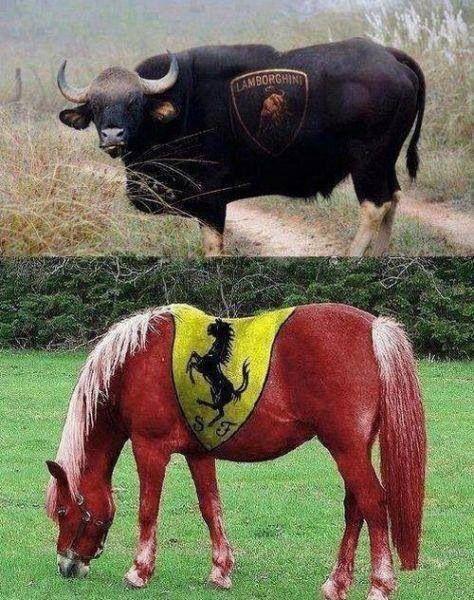 Lamborghini vs. Ferrari ;)