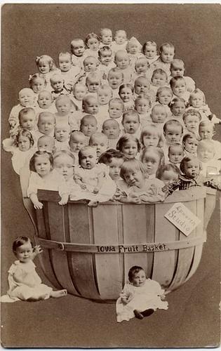 Basket Full Of Babies Photo