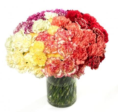 rainbow carnation arrangement