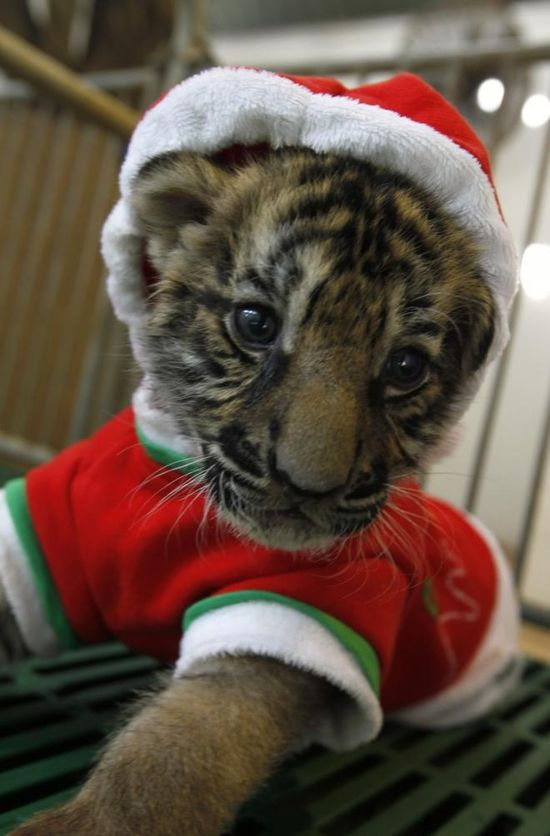 Cute Animals Dressed For Christmas!!!!