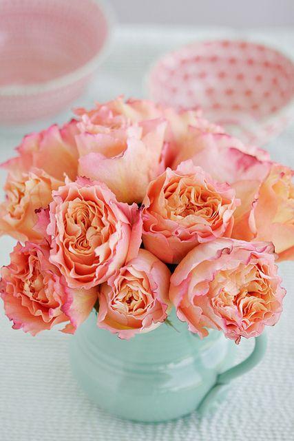 #roses    -    vacationtravelogu...