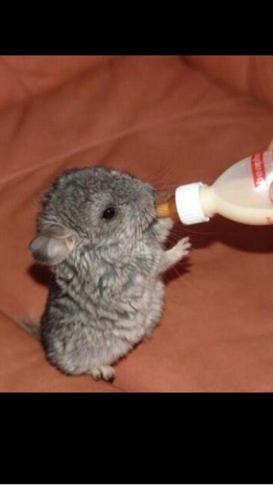 Cute baby animal