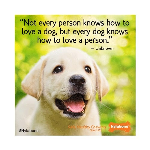 """""""Not every person knows how to love a dog, but every dog knows how to loave a person."""" ~ Unknown Courtesy of www.nylabone.com #dogs #pets #quotes"""