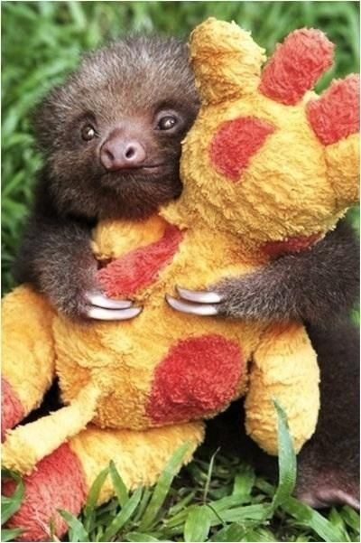 baby sloth with a stuffed giraffe!