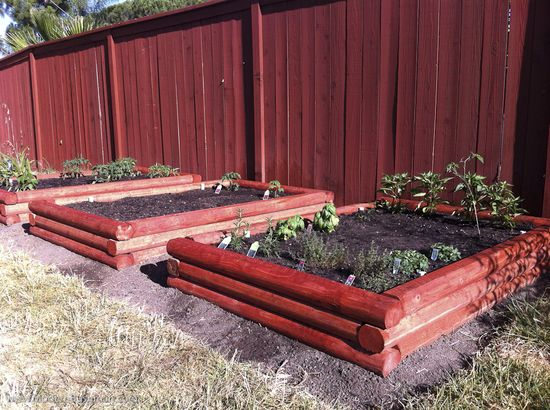 Planted Raised Bed Vegetable Garden - I need a do-over!