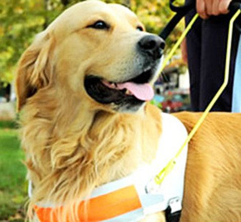 'Dementia Dogs' are our new favorite service animals!