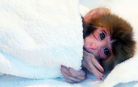 Baby monkey!