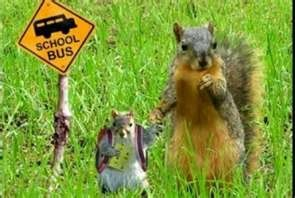 Squirrels go to SCHOOL TOO