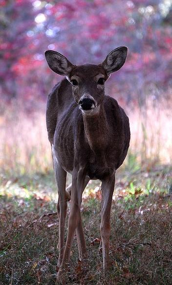 #hart #beauty #animals