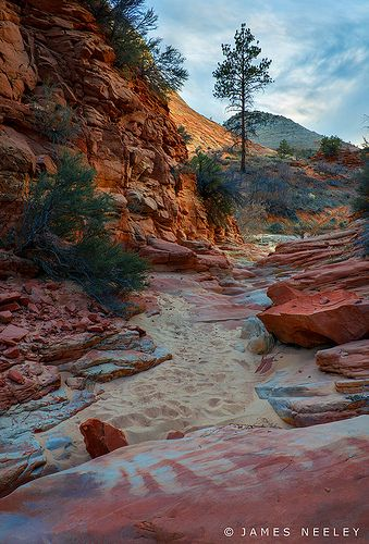 Zion National Park, Utah.  Go to www.YourTravelVid... or just click on photo for home videos and much more on sites like this.