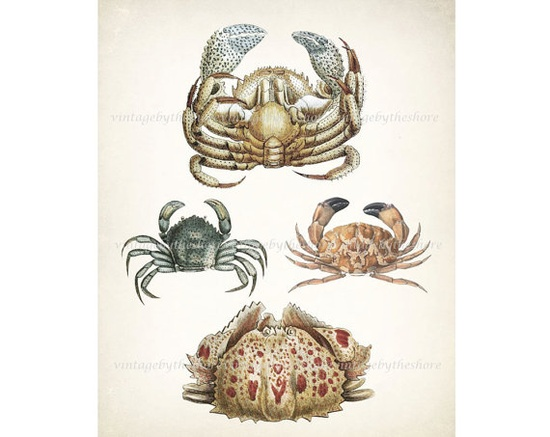Four Crabs Natural History Wall Decor Print by vintagebytheshore, $15.00