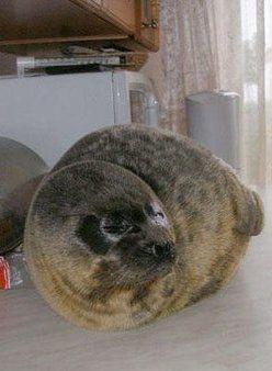 Cute Pet Seal