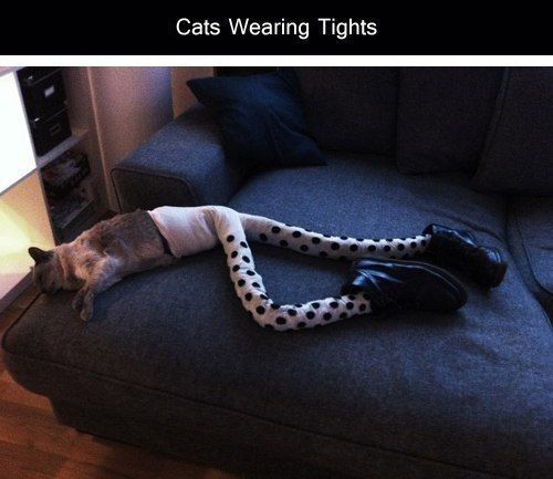 Funny photo series Cats with tights