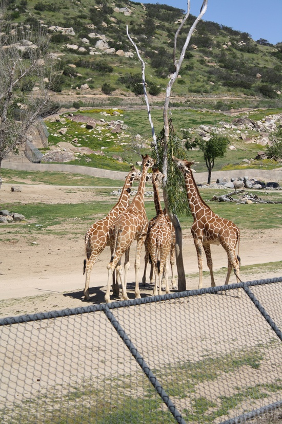 Wild Animal Park, San Diego