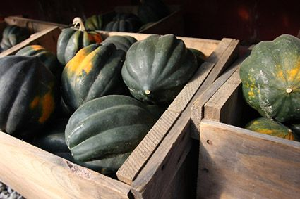Acorn squash guide: What to look for, cooking tips & benefits