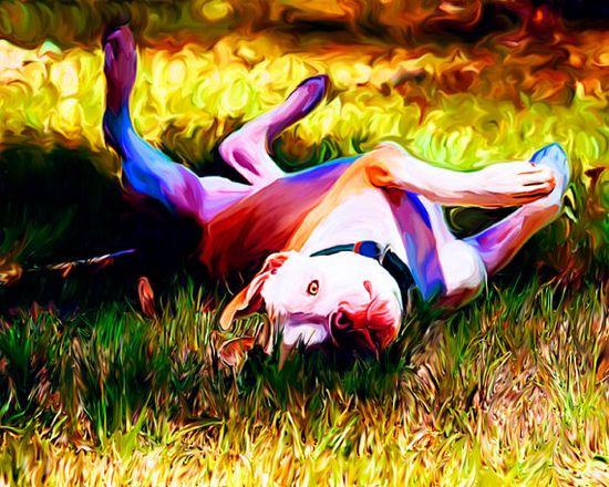 #Pitbull print. #dog