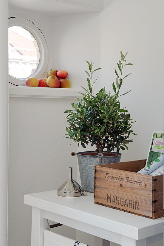 #interior #decor #styling #scandinavian #plant