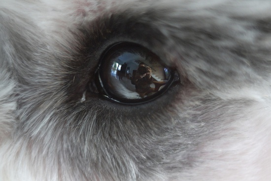 In Your Eyes by Quentin Yeong #Miniature #Schnauzer