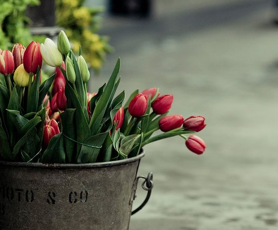 Bucket of Tulips.