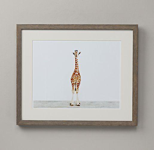 Baby Animal Portrait - Giraffe