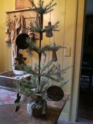 Cute little tree...