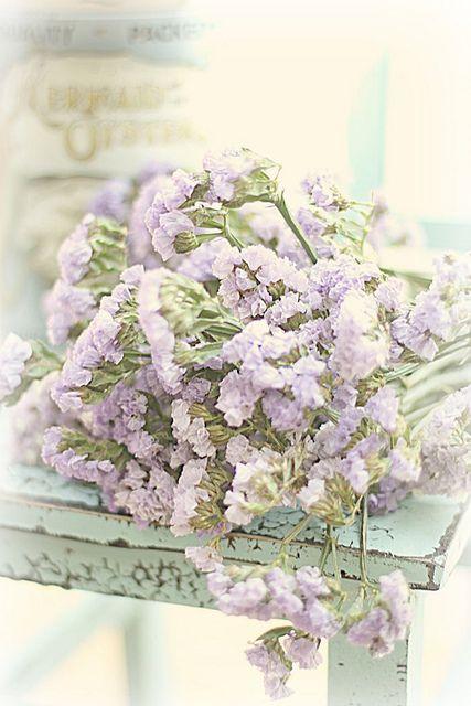 pretty lilac pastel colours