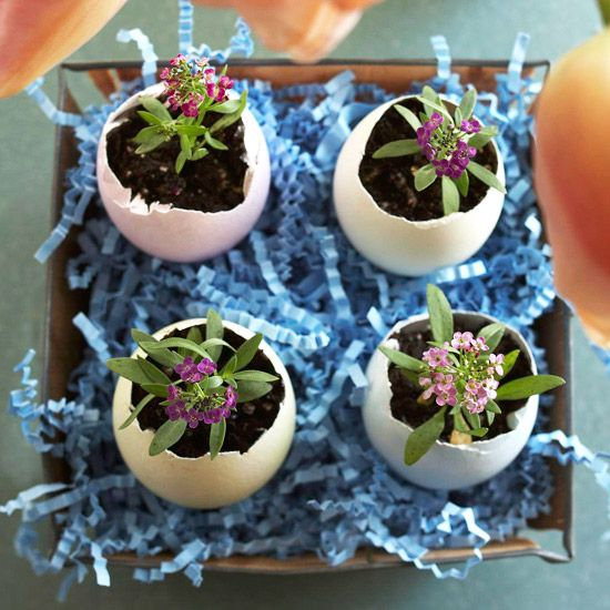 Here we've given eggshells a second life as pretty planters.