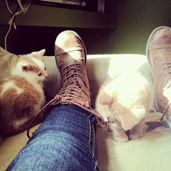 boots and cats and boots and cats !!