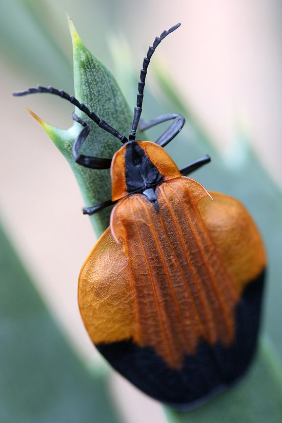 bug . beauty #insects