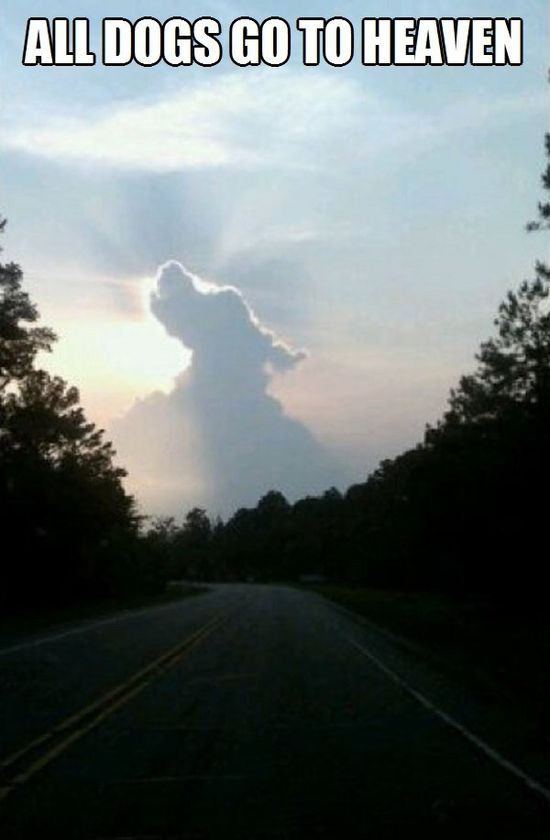 All Dogs Go To Heaven