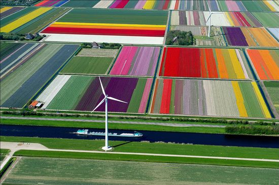 An aerial view of a tulip farm in the Netherlands shows just how colorful these flower fields are.