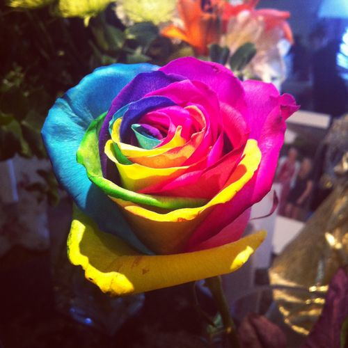 Colored rose