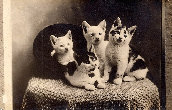 Ok, this darling photo seals it, I'm starting a board devoted to vintage pet images! :) #pets #vintage #cats #kittens #cute #animals #postcard