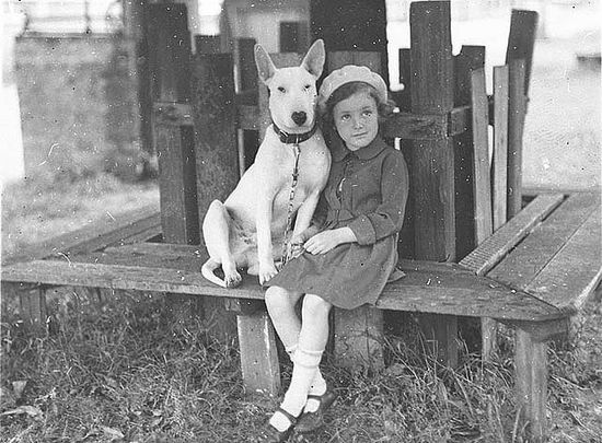 Margaret Shaffhauser with bull terrier dog at the Canine Association Show, 3 Nov 1934 / by Ted Hood