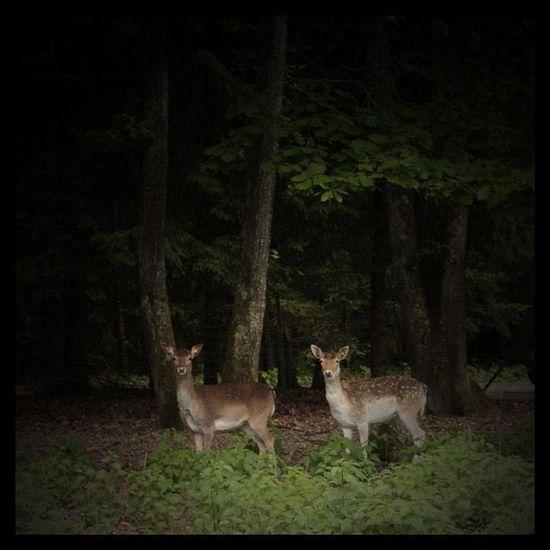 Bambi & friend