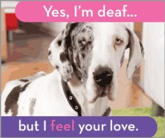 Please adopt special needs pets. They need care and love!!!