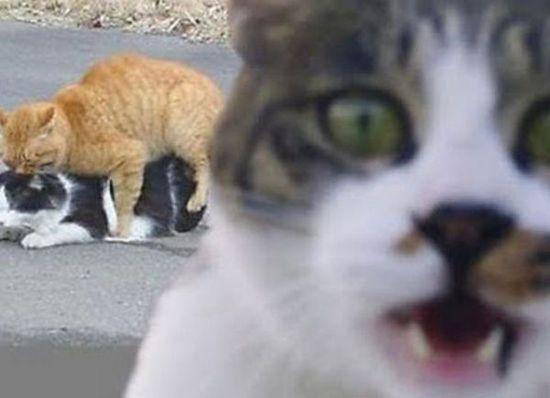 animal photo bombs... hilarious