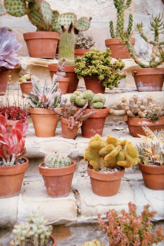 Cacti in soft colors