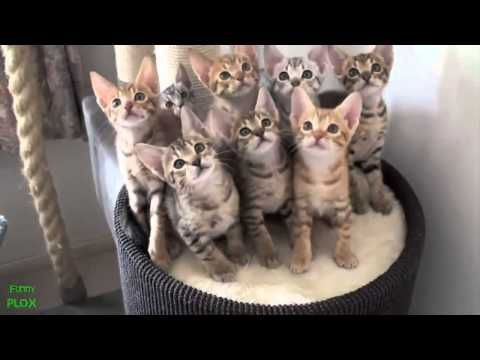 Best Funny Animal Videos Compilation 2013 HD] - movies.chitte.rs/...