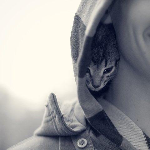 I need me a kitten!