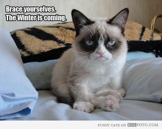 oh, grumpy cat. you make everything better.