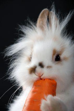 Cute bunny..