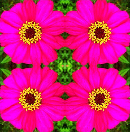 Flower Power - Digit