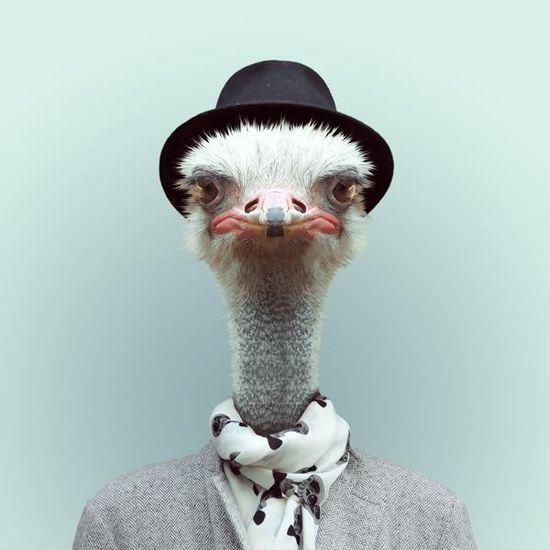 Funny Portraits of Animals Dressed Like Humans - My Modern Metropolis