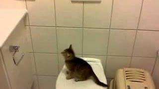 #Funny #Cats #FAIL