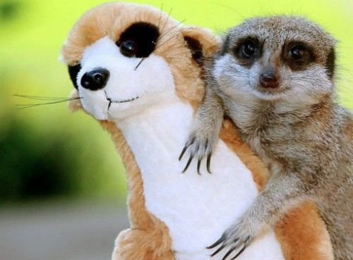 stuffed animals and real animals